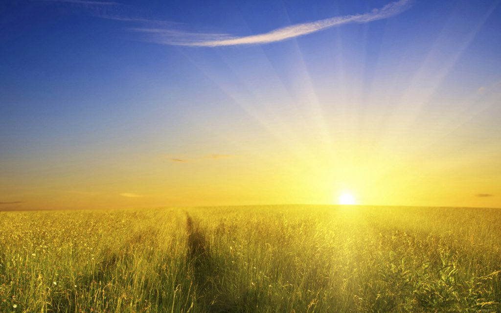 ws_bright_sunshine__field_1920x1200-2